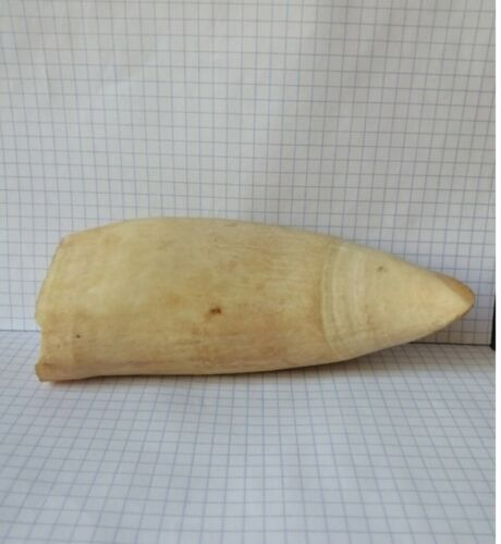 Vintage Faux Replica Whale Tooth Teeth for Scrimshaw w -  355 grams.