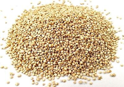 White Quinoa Grain, Grade A Premium Quality, Free UK P&P Free White Quinoa
