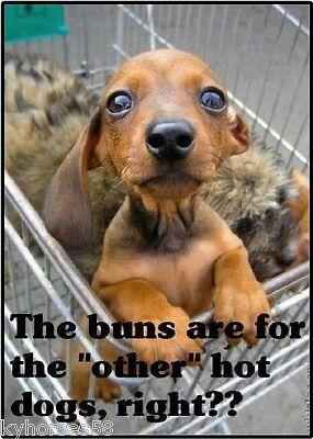 Funny Dog Humor Dachshund The Buns Refrigerator Magnet