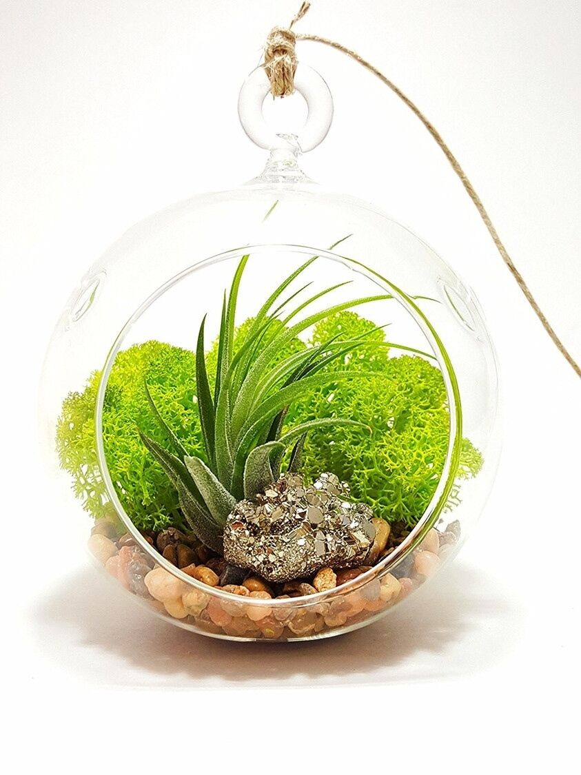Terrariums are a great way to brighten up a room. The air plant needs water  once a week and bright indirect light. They will do well in office lighting  or ...