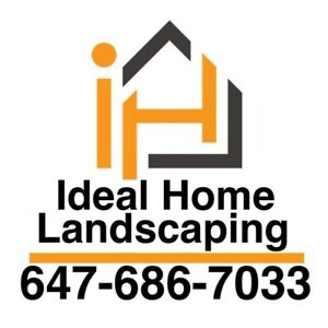 Landscaping and fence