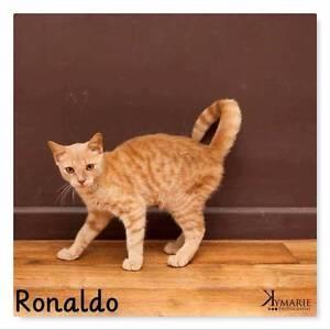 URGENT adopt ronaldo!! Buderim Maroochydore Area Preview