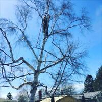 Tree removal and trimming services