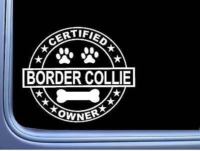 Certified Border Collie L264 Dog Sticker 6