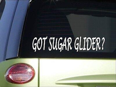 Got Sugar Glider *H977* 8 Aufkleber Käfig Essen Haus Flying Squirrel (Flying Käfig)