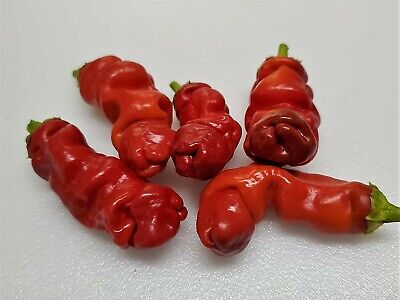 Peter Pepper Seeds, Non-GMO, Heirloom, 10+ Seeds, Free Shipping RARE