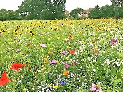 1 OZ=18,000+DRYLAND WILDFLOWER MIX 21 Seeds Drought Tolerant -