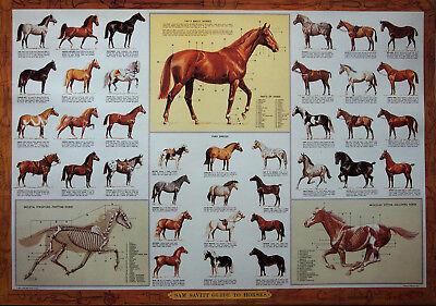 Art Print Guide To Horses Chart Poster Medium Size By Sam Savitt 21X14 3 4