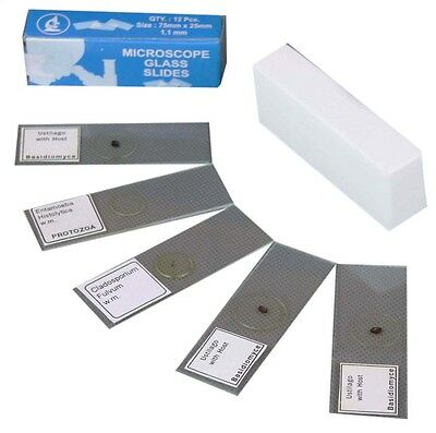 Biology Light Microscope Set Of 12 Blank 20 Cover Slips 5 Prepared Slides Kit