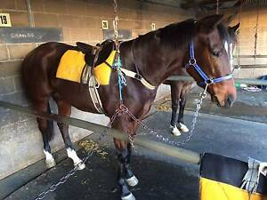 RACEHORSE SHARE AVAILABLE 5% IN IMPRESSIVE 2yo FILLY Broadmeadow Newcastle Area Preview