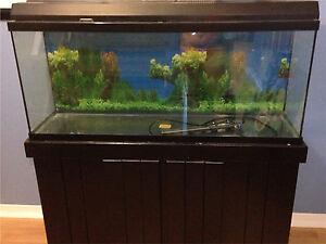 aquarium 75 gallons avec meuble noir