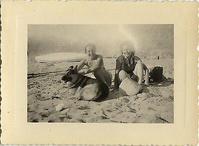 Photo ancienne - vintage snapshot - chien berger allemand plage - dog beach 1951