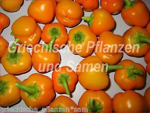 miniature orange mini paprika chili s ss f r kinder f r balkon 10 frische samen ebay. Black Bedroom Furniture Sets. Home Design Ideas