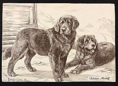 Original 1934 Dog Print / Bookplate - TIBETAN MASTIFF,  Nina Scott Langley