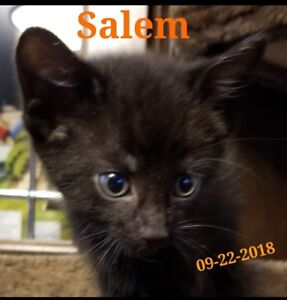 Salem wants to be your furever kitten!