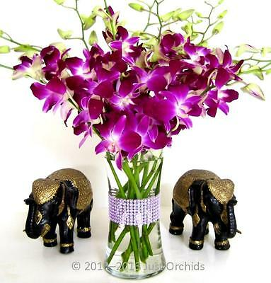 Fresh Flowers Delivery - Purple Dendrobium Orchids with Vase