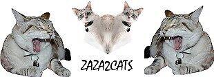 ZAZA2CATS