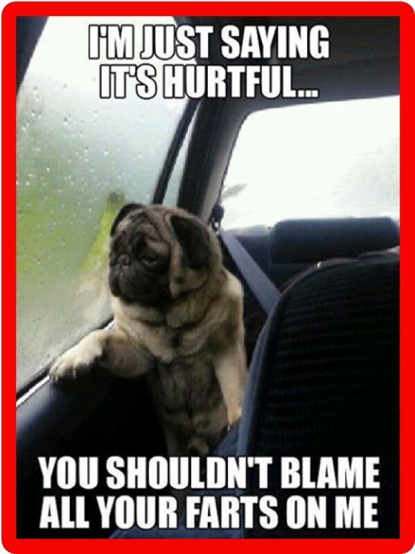 Funny Dog Humor Pug Don