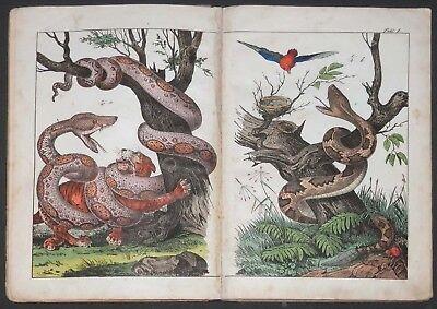 Naturgeschichte der Amphibien Fische Insekten 30 kolorierte Doppeltafeln ca 1860