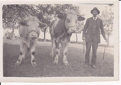 Orig. Foto Bauer mit zwei Rindern Ochsen ca. 1930