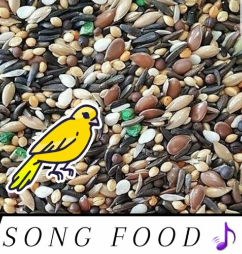 Canary Song Food Treat For Canaries FRESH!!! From Bulk Choose Size!!!