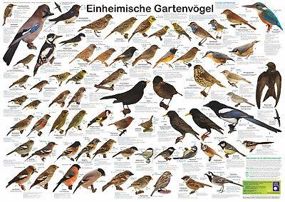 """Bio-Poster """"Einheimische Gartenvögel"""""""