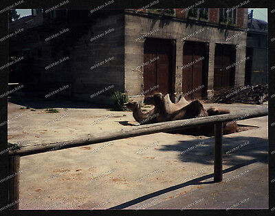 Foto-Stuttgart-Wilhelma-Kamelhaus-Bad-Cannstatt-Gebäude-Architektur-um-1985-8