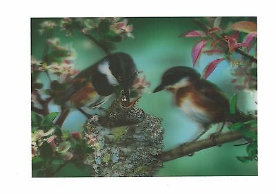 bird nest photography 3D Lenticular Holographic Stereoscopic Picture Wall Art