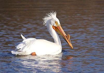 White Pelican's Lair