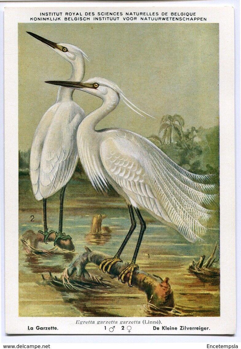 CPA - Carte postale- BXL-Institut Royal des Sciences Naturelles La Garzette N°2