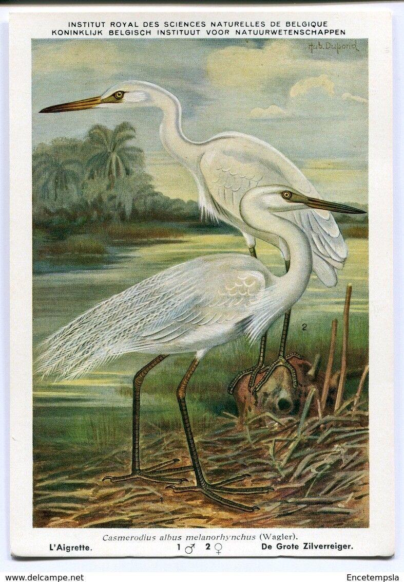 CPA - Carte postale- Belgique-Institut Royal des Sciences Naturelles de Belgique