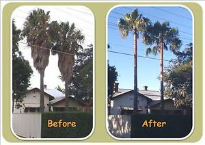 Pristine Palm Pruning Richmond West Torrens Area Preview