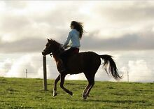 Gorgeous 13.1hh Pony For Sale Baw Baw Area Preview