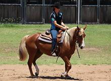 Quater Horse. Bred In The Purple ***Video **** Laidley Lockyer Valley Preview