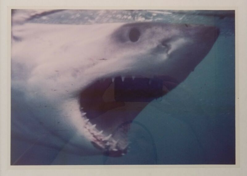 Great White Shark Vintage Photograph