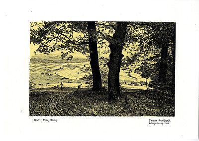 Farb-kunst-druck (Walter Lilie, Zürich Taunus- Landschaft Histor. Farb- Kunstdruck v. 1902)