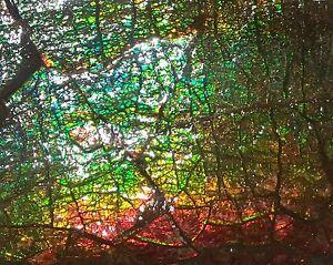 Ammolite rainbow gem piece