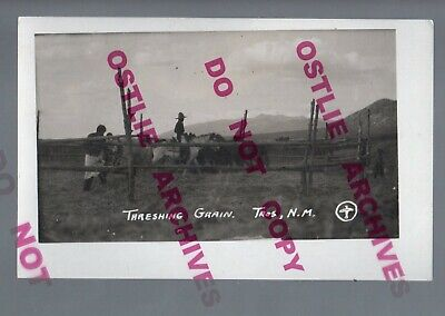 Taos NEW MEXICO RPPC c1910 INDIANS HARVESTING GRAIN Wheat Horses STOMPING Indian