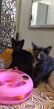 URGENT URGENT RESCUED SIBLINGS FLORA AND SIMBA Riverwood Canterbury Area Preview