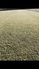 Turf for sale Forest Lake Brisbane South West Preview