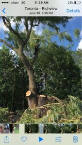 Tree cutting- land cleaning