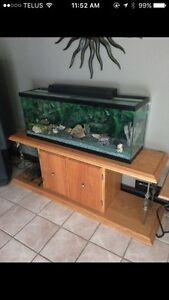 50 gallon fish tank with Oakstand
