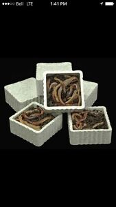 Fishing worms - LOWEST prices in Haliburton