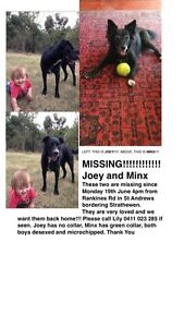 Missing Dogs! Arthurs Creek Nillumbik Area Preview