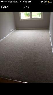 Free cream carpet