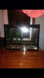 snake lizard frog or spider tank for sale Raymond Terrace Port Stephens Area Preview