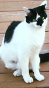 Missing cat from Fleming's hill in torbay
