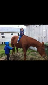 Looking for backyard family horse to love