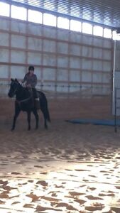 Offering a discount on training on 3-4 year old horses.