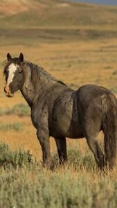 HORSE SALE IN PRINCE ALBERT  SEPTEMBER 21